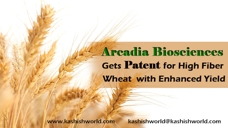 Patent for High Fiber Wheat