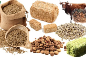 Food Additives for Animals